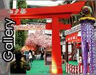 อัพรูปงาน Tanabata Festival Cosplay Contest